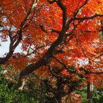 満昌寺 裏庭の紅葉