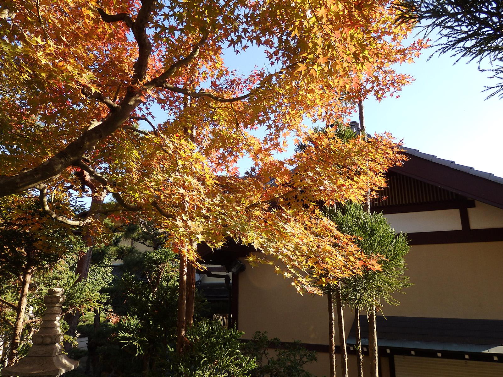 裏庭の紅葉2